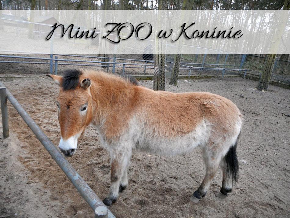 Mini ZOO w Koninie