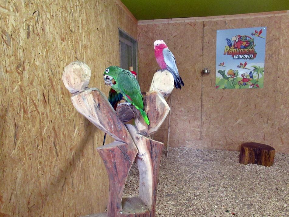 Papugarnia Krupówki w Zakopanem