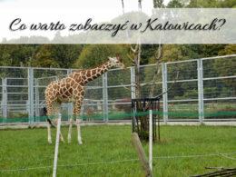 Co warto zobaczyć w Katowicach? Wspominamy wspaniałą wycieczkę