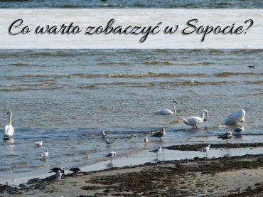 Co warto zobaczyć w Sopocie? 6 sprawdzonych miejscówek