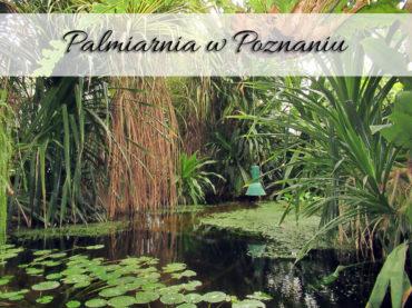 Palmiarnia w Poznaniu. Fenomenalne miejsce o każdej porze roku