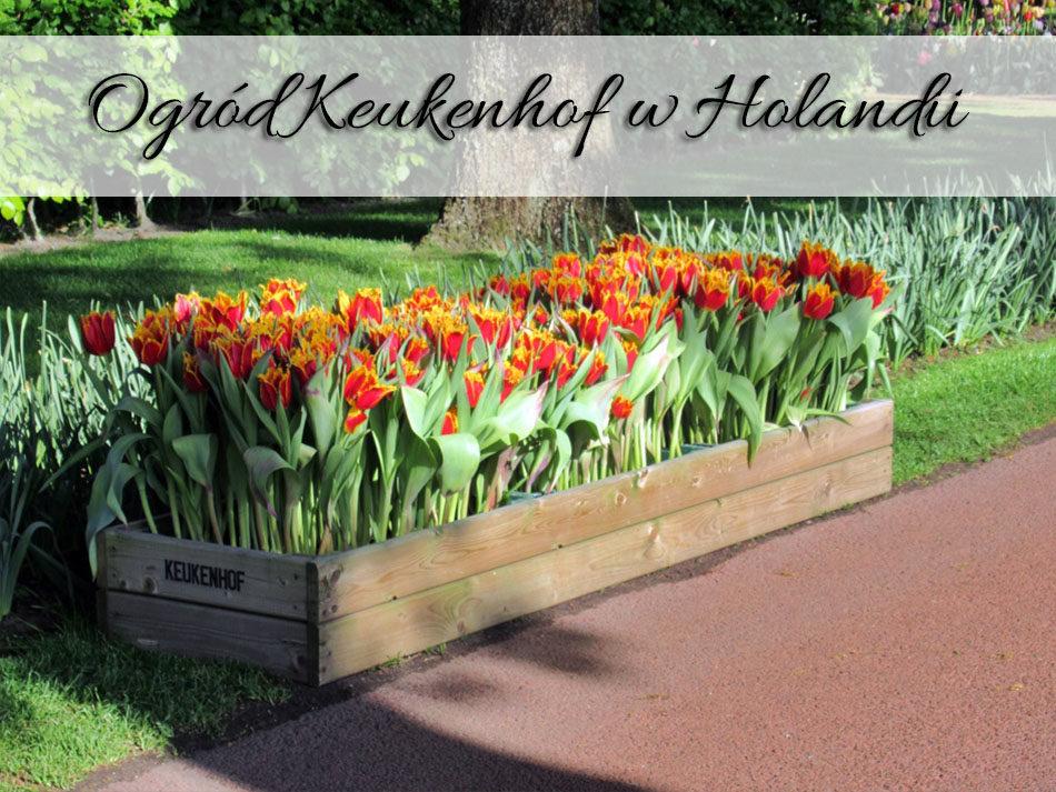 ogrod-keukenhof-w-holandii