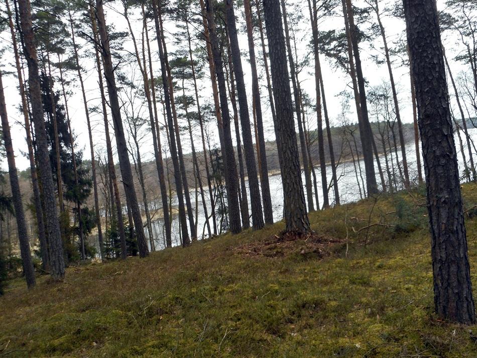 Nocleg w lesie?