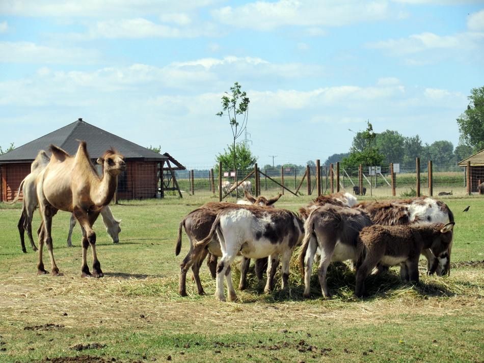 ZOO Safari w Borysewie