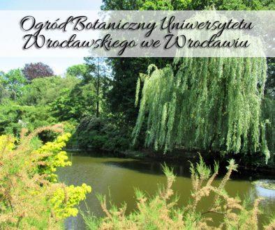 ogrod-botaniczny-uniwersytetu-wroclawskiego-we-wroclawiu