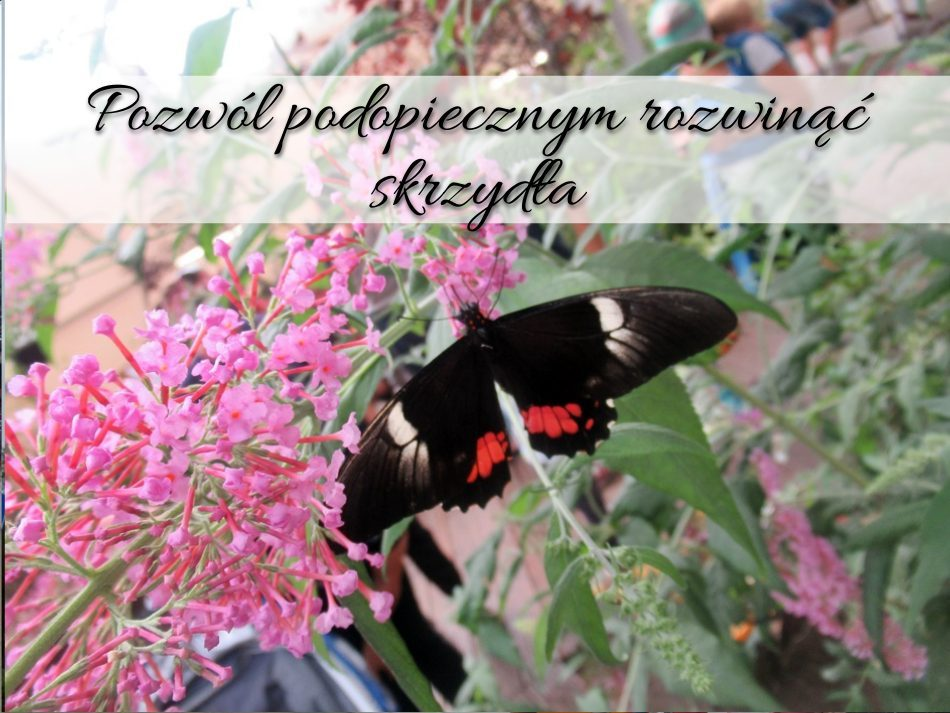 Pozwól podopiecznym rozwinąć skrzydła