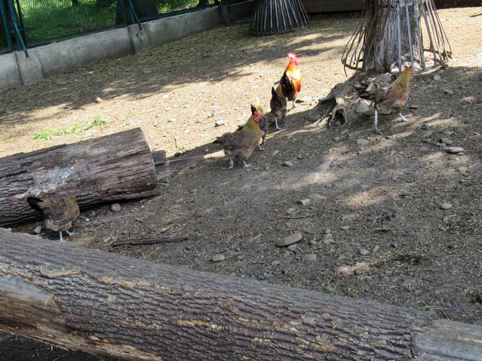Mini ZOO w Żywcu