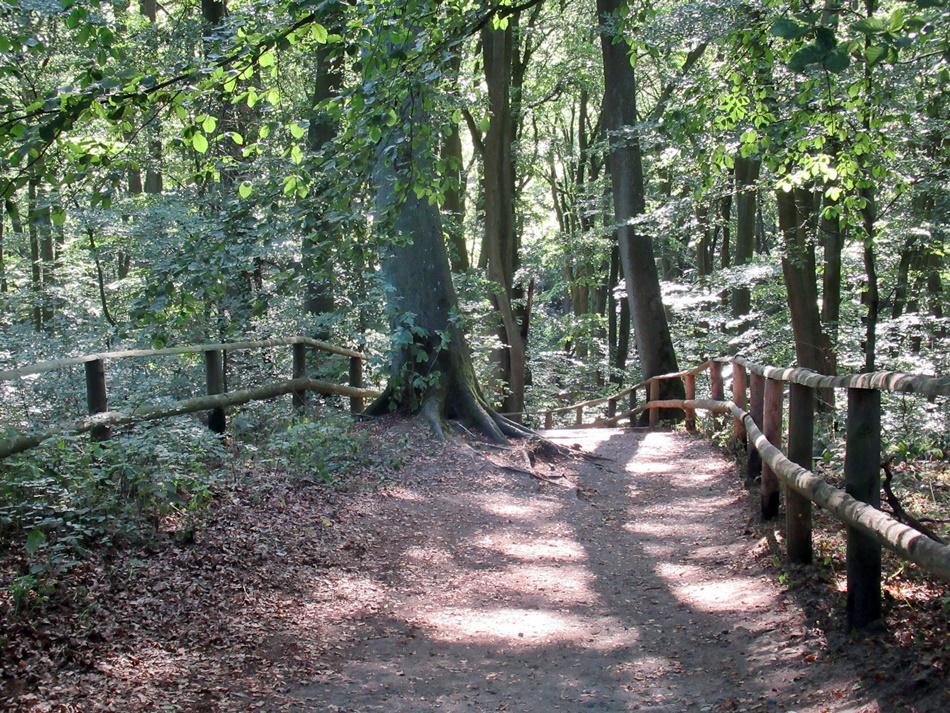 Wzgórze Gosań w Wolińskim Parku Narodowym