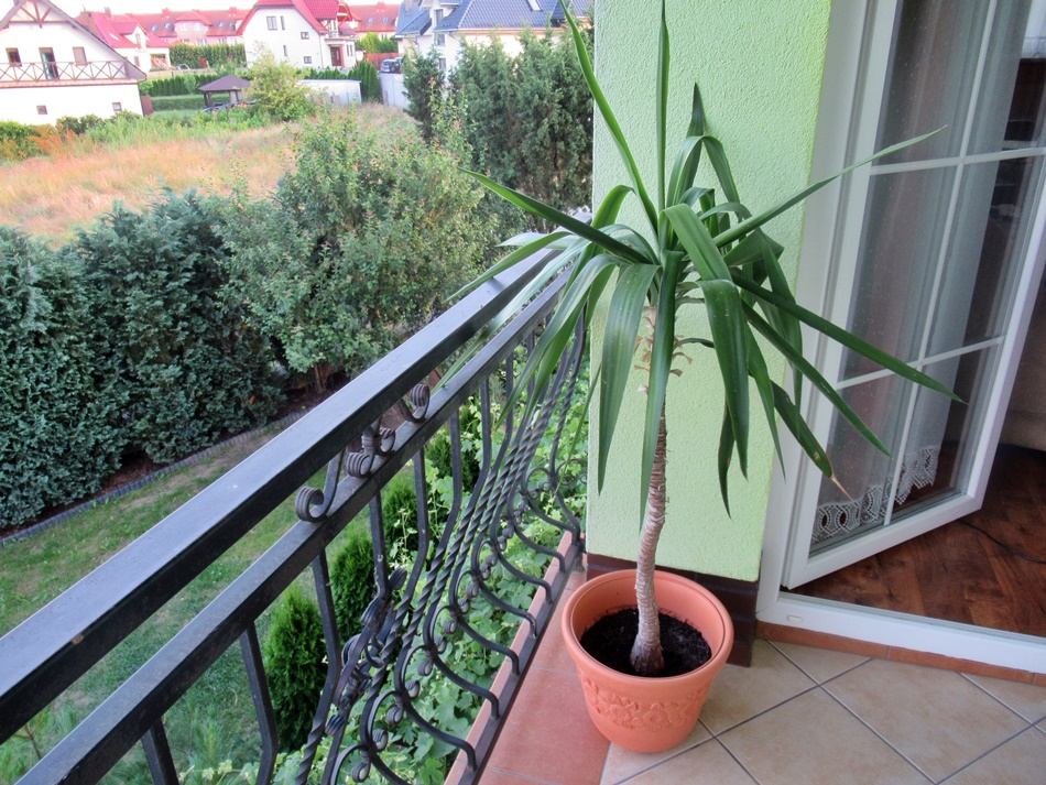 Nocleg z tarasem/balkonem
