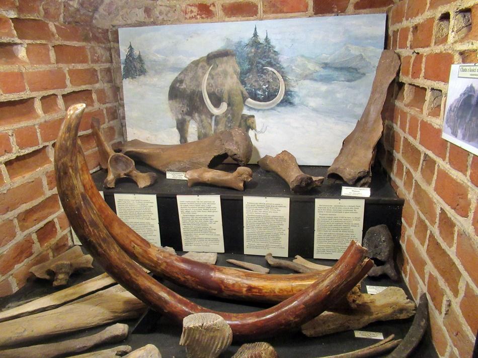 Muzeum Kamieni w Kamieniu Pomorskim