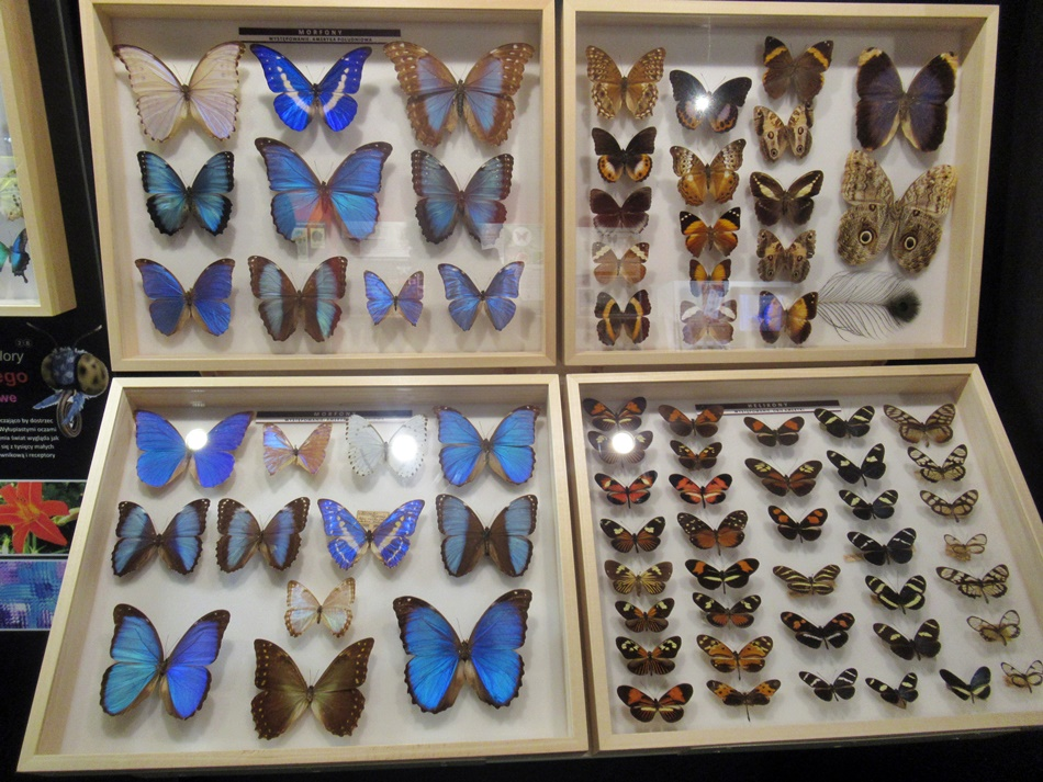 Muzeum Motyli w Łebie