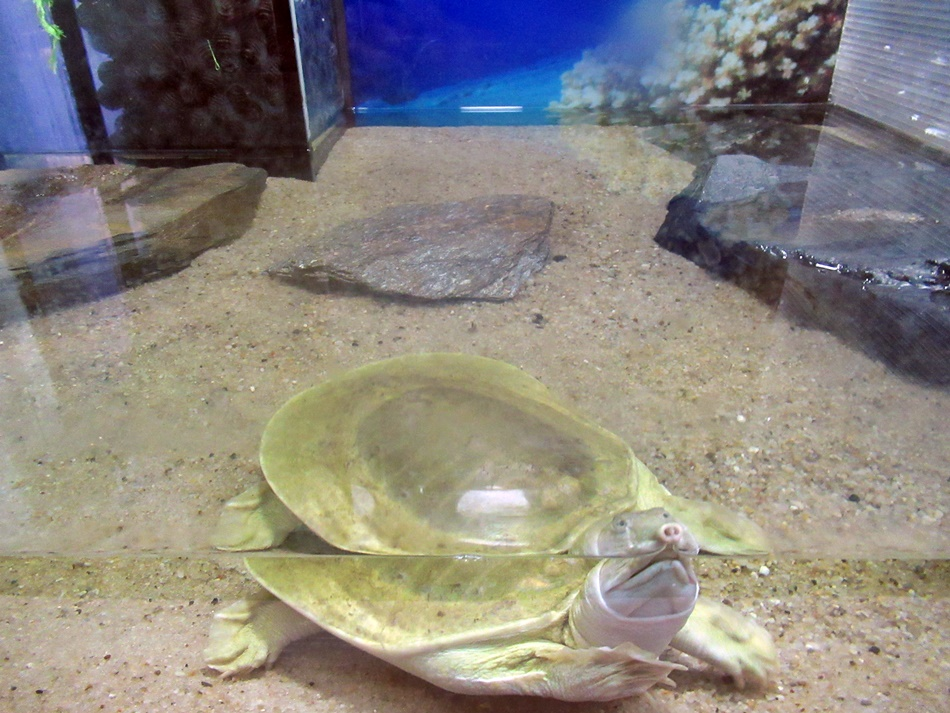 Oceanarium w Łebie
