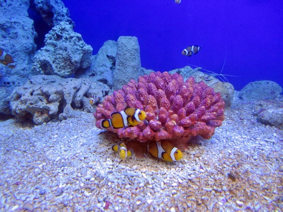 Oceanarium w Rewalu
