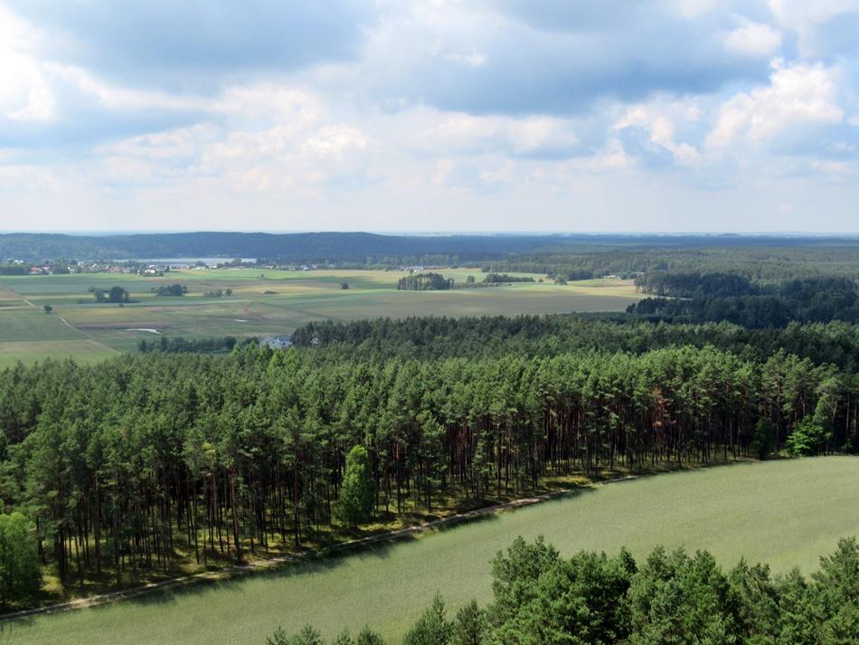 Wieża widokowa w Przytarni